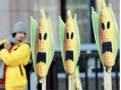 Egyptian proponents of biotech agriculture discuss merits of genetically modified crops | Égypt-actus | Scoop.it