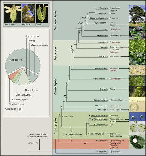 Field Guide to Plant Model Systems | plant cell genetics | Scoop.it