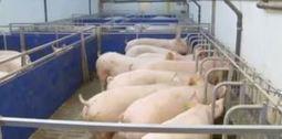 Dissertation zeigt: Tierwohl hängt nicht von Bestandsgröße ab | Agrarforschung | Scoop.it