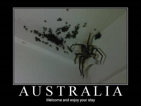 Bugs In Australia Are INTENSE | Australia Travel Ideas | Scoop.it