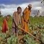 """Afrique centrale: Signature pour la mise en œuvre du PDDAA - Journal du Cameroun.com   Revue de presse """"Afrique""""   Scoop.it"""