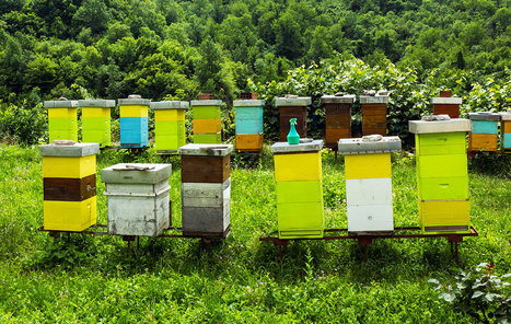 How to Build a Better Beehive - Modern Farmer | Permaculture, Horticulture, Homesteading, Bio-Remediation, & Green Tech | Scoop.it