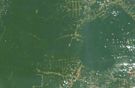 rtsinfo.ch - Infographie - Déforestation   nous ne pourrons pas dire nous ne savions pas   Scoop.it