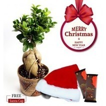 Buy Indoor Plants Online | Flowers online | Scoop.it