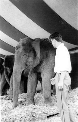 Soirée Playtime / Julien Blaine | FRAC Franche Comté / Reconstitution de L'Interview des éléphants | Poésie Elémentaire | Scoop.it