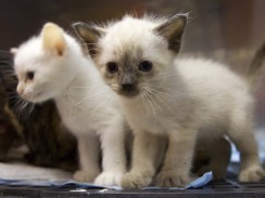 Cute pictures of baby animals may improve focus   It's Show Prep for Radio   Scoop.it