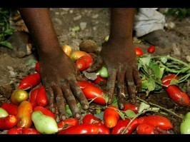 "Slavery, Empire and Tomato Pickers | ""Environmental, Climate, Global warming, Oil, Trash, recycling, Green, Energy"" 