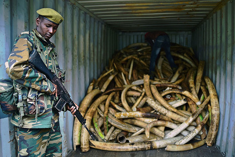 This New Map of Major Ivory Seizures Could Help Save Elephants | Conservation | Scoop.it