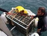 189 bouteilles de cava sont vieillies en mer - La Clau | Marketing - Vins et spiritueux | Scoop.it