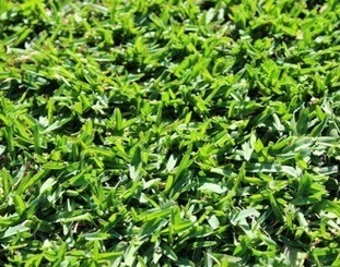 Lawn Turf Suppliers and Lawn Maintenance: Sydney Turf Supplies: Landscape Your Property with Ease | Sydney Turf Supplier | Scoop.it