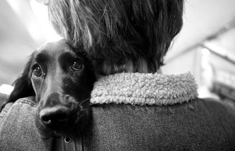 Could Man's Best Friend Be Man's Best Medicine? | UANews | CALS in the News | Scoop.it