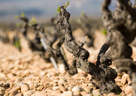 Four Decades of Changing Wine World | Vitabella Wine Daily Gossip | Scoop.it