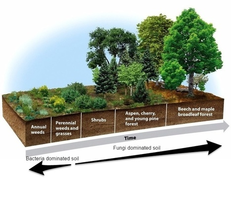 The Definitive Guide to Building Deep Rich Soils by Imitating Nature - Permaculture Apprentice | Epicurist: In Victus Veritas | Scoop.it
