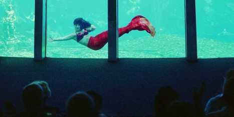 Florida's Weeki Wachee Mermaid Park - Business Insider | mermaids | Scoop.it