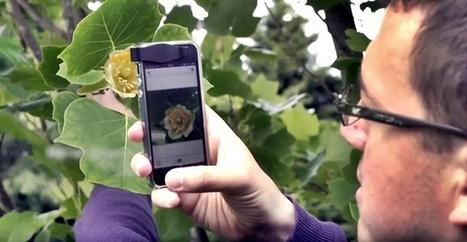 Una app permite identificar las plantas haciendo una foto con el móvil | Nuevas Geografías | Scoop.it