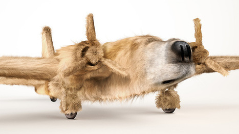 Dogfighters | Foto's | Scoop.it