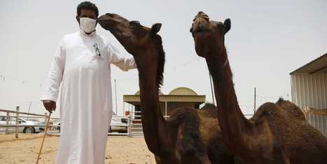 Scientists Are Now Worried That MERS Could Be Airborne | Virology News | Scoop.it