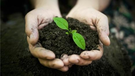 10 cursos de graça para quem quer salvar o meio ambiente | EXAME.com | Percepções de Aprendizagem Online | Scoop.it