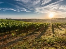 Which is the Italian white wine reminiscent of good French Chablis? | Wines and People | Scoop.it