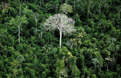 Scientists have identified a key way the Amazon's forests may adapt to climate change | CALS in the News | Scoop.it
