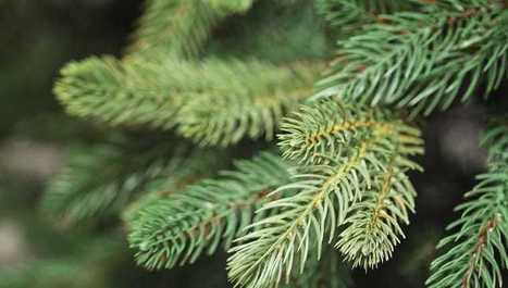 Voňavé ihličie: Najjednoduchšia a najprírodnejšia vianočná dekorácia | domov.kormidlo.sk | Scoop.it
