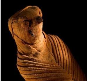 In death, ancient Egyptians fed their animals   Égypt-actus   Scoop.it