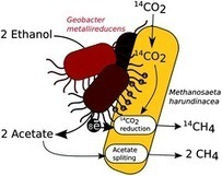 A new model for electron flow during anaerobic digestion: direct interspecies electron transfer to Methanosaeta for the reduction of carbon dioxide to methane - Energy & Environmental Science (RSC ... | Geomicrobiology | Scoop.it