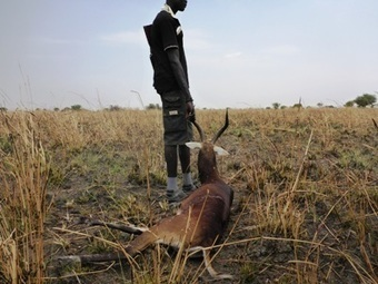 South Sudan conflict placing millions of wildlife species at risk | Wildlife Trafficking: Who Does it? Allows it? | Scoop.it