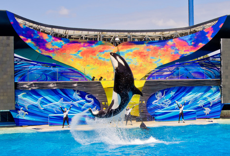 #SeaWorld Struggles to Stay Above Water - Guardian Express. | #Orca #Avenger @VidarOceans | Scoop.it