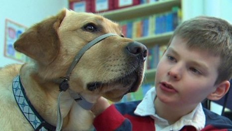 Eye On Education: Dog Makes Big Difference In Special Needs Classroom | Autism Supports | Scoop.it