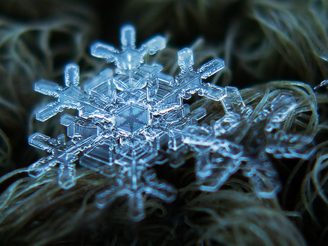 20 Stunning Closeups Of Snowflakes That Will Change The Way You See Nature | Distractify.com | Alie's Page | Scoop.it