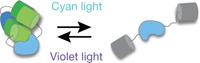 All-in-one optogenetics | SynBioFromLeukipposInstitute | Scoop.it