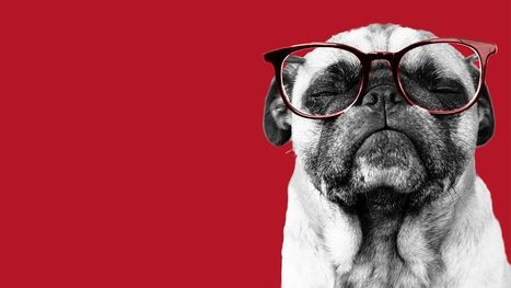 How to Manage People Who Are Smarter than You  (Harvard Business Review) | Social Business and Digital Transformation | Scoop.it