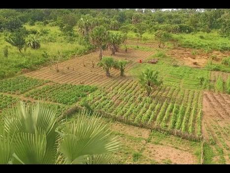COP 22 : l'Afrique vise l'indépendance alimentaire grâce à sa paysannerie   Initiatives pour un monde meilleur   Scoop.it