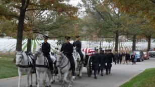 Horses Escort US Heroes On Final Journey - Voice of America | Horse And Rider World | Scoop.it