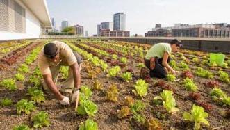 Rooftop gardens can boost restaurant profits | Operations content from Restaurant Hospitality | People Profits Planet | Scoop.it
