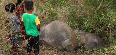 Four elephants killed by Sri Lankan train | Pachyderm Magazine | Scoop.it