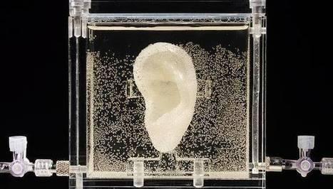 Clic France / Le musée allemand ZKM expose une réplique 3D de l'oreille coupée de Van Gogh | Clic France | Scoop.it