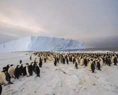 Humans Visit Huge Penguin Colony for First Time | Amocean OceanScoops | Scoop.it