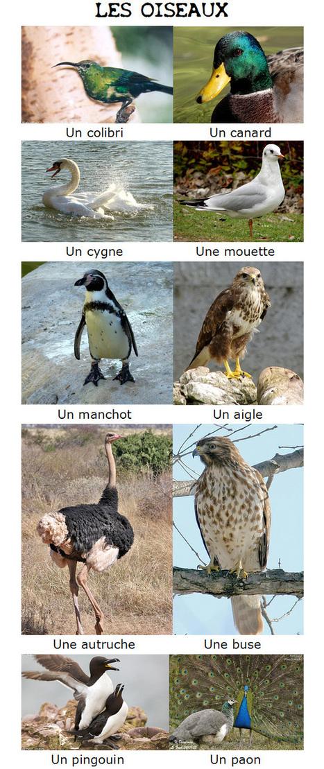 La classification des animaux | Ressources FLE | Scoop.it