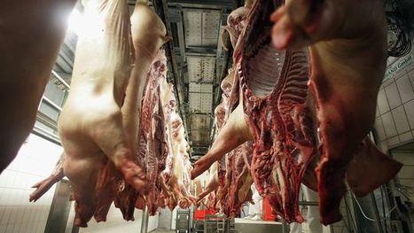 Fleischkonsum: Fünfzehntausend Schweine täglich | rezepte | Scoop.it