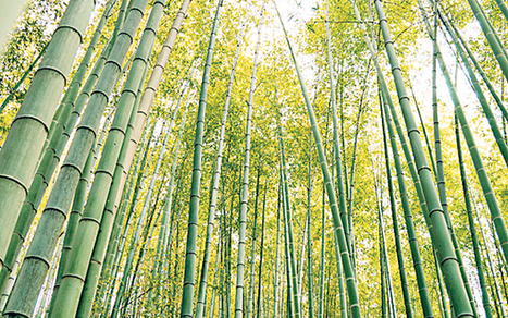 Are bamboo products really the eco-friendly option? - Telegraph | Bamboo based products | Scoop.it