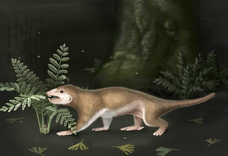 165-million-year-old proto-mammal shows that traits like hair and fur originated well before the rise of mammals | ALS animals | Scoop.it