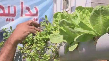 A Gaza, faute d'espace, des habitants cultivent sur leur toit | Nature et urbanisme | Scoop.it