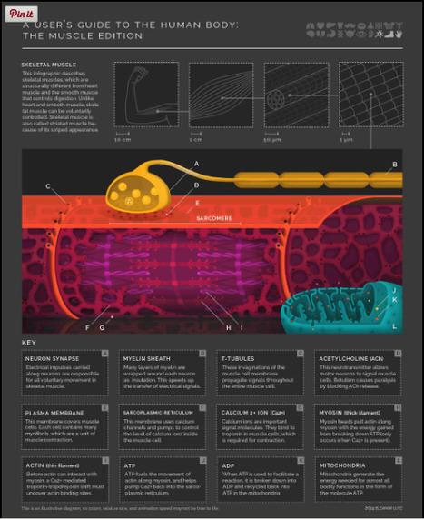 Infografías Científicas Animadas de Eleanor Lutz | Banco de Aulas | Scoop.it