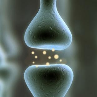 NitroMemantine Reverses the Loss of Brain Connections in Alzheimer's Disease | Alzheimer's Reading Room | Alzheimer's Reading Room | Scoop.it