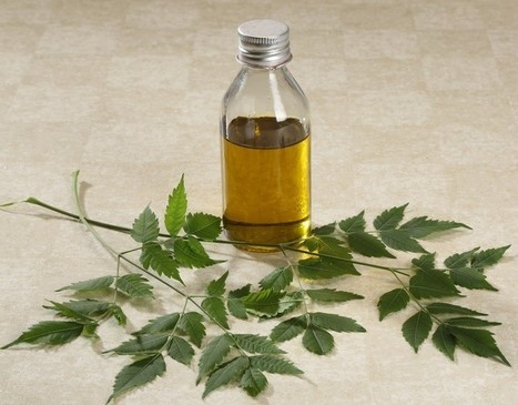 15 Ways To Use Neem Oil For Skin, Hair & In The Home | Raw Edible Organic Skin Care | Scoop.it