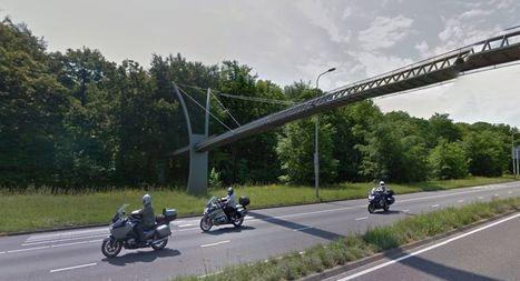 Opinión | El costoso puente para ardillas que ellas desdeñan | Ingenieros Civiles | Scoop.it