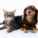 AK Pet Services | Kent News and News in England and the South East of England | Scoop.it