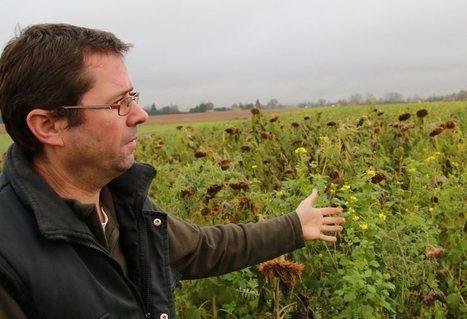 Luc Violette cultive une agriculture atypique | Chimie verte et agroécologie | Scoop.it